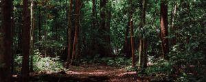 Climate Trail - 2019 - 32km