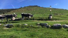 Trail kalender Frankrijk Grand Est Haut-Rhin Trailrun in Mei 2021 > Trail des Marcaires (Muhlbach-sur-Munster)