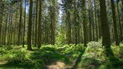 Calendrier trail Belgique   Trail en Mai 2021 > Roch&Trail Theux (Theux)