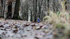 Trail calendar France   Trailrunning race in December 2019 > Les 40 Bosses (Saint-Leu-La-Forêt)