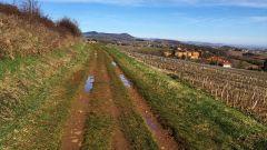 Trail calendar France Auvergne-Rhône-Alpes  Trailrunning race in March 2021 > La TCN (Theizé)