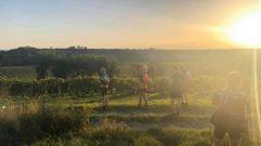 Calendrier trail France Nouvelle-Aquitaine Charente Trail en Juin 2021 > Trail de la Grande Champagne (Segonzac)