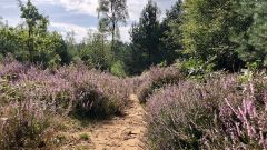 Calendrier trail Pays-Bas   Trail en Août 2021 > Amerongse Berg Trail (Amerongen)