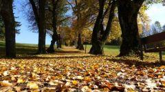Calendrier trail Belgique   Trail en Novembre 2020 > Trail du Beaujolais Nouveau (Haversin)