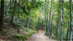 Trail kalender Frankrijk Auvergne-Rhône-Alpes Ardèche Trailrun in Oktober 2020 > Le Cheylarois Trail (Le Cheylard)