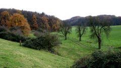 Calendrier trail Pays-Bas   Trail en Août 2021 > Corio Trail (Herlen)