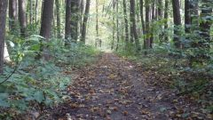 Trail kalender België   Trailrun in April 2021 > Kravaal Trail (Meldert)