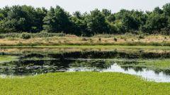 Trail kalender Frankrijk Nouvelle-Aquitaine Landes Trailrun in Juni 2021 > Lou Trail de l'Estuchat (Rion des Landes)