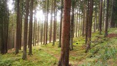 Calendrier trail Belgique   Trail en Octobre 2020 > Trail de l'Amblève  (Ligneuville )