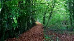 Trail kalender België   Trailrun in Oktober 2020 > Houppy Trail (Partie 3 - Lustin) (Lustin)
