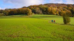 Trail calendar Belgium   Trailrunning race in September 2020 > Kemmelberg Trail (Heuvelland)