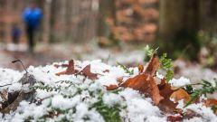Trail kalender België   Trailrun in December 2020 > Meerdaalwoudtrail (Bierbeek)
