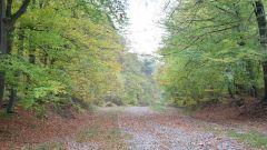 Calendrier trail Belgique   Trail en Octobre 2020 > Trail de Nivezé (Niveze)