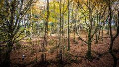 Trail kalender Frankrijk Occitanie Tarn Trailrun in November 2020 > Oritrail (Soreze)