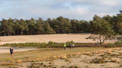 Trail calendar the Netherlands   Trailrunning race in February 2020 > RunForestRun Besthemerberg (Ommen)