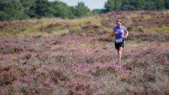 Calendrier trail Pays-Bas   Trail en Août 2021 > RunForestRun Hondsrug (Odoorn)