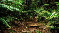 Trail kalender Frankrijk   Trailrun in September 2020 > Raid 974 (Saint joseph)