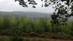 Calendrier trail Belgique   Trail en Septembre 2020 > Trail des Run'Harre (Manhay)
