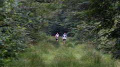 Trail calendar the Netherlands   Trailrunning race in June 2020 > RunForestRun Gees-Meppen (Meppen)