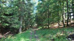 Trail calendar France Bourgogne-Franche-Comté  Trailrunning race in August 2020 > Trail du Saugeais (Gilley)