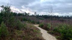 Calendrier trail Pays-Bas   Trail en Septembre 2021 > Schadijkse Trail (America)