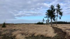 Calendrier trail Pays-Bas   Trail en Juillet 2021 > Strabrechtse Heide Trail (Heeze)