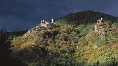 Trail calendar France Grand Est Haut-Rhin Trailrunning race in June 2021 > Les Courses du Taennchel (Ribeauvillé)