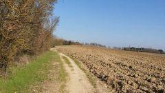 Trail calendar France   Trailrunning race in March 2020 > TARA Muret Trail (TMT) (Muret)