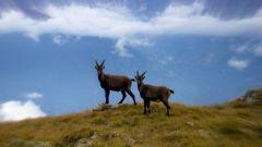 Calendrier trail France   Trail en Juillet 2021 > Trace du Bouquetin (Pralognan-la-Vanoise)