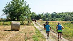 Trail calendar France Auvergne-Rhône-Alpes  Trailrunning race in July 2020 > Raidlight Trail de Châbons (Châbons)
