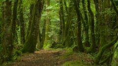 Trail calendar France Bretagne  Trailrunning race in February 2021 > Tro Ar Gar (Plufur)