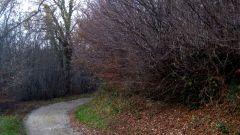 Calendrier trail France   Trail en Février 2021 > Trail Hivernal de la Vallée de la Thure (Cousolre)
