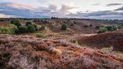 Calendrier trail Pays-Bas   Trail en Septembre 2021 > Veluwse TrailRun (Ermelo)