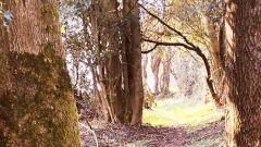 Calendrier trail Belgique   Trail en Mai 2020 > La Xhorisienne nocturne (Xhoris - Ferrières)