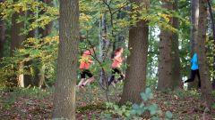 Trail kalender Nederland   Trailrun in Oktober 2019 > Alfa Trailrun (Thull Schinnen)
