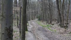 Trail calendar France Pays de la Loire  Trailrunning race in October 2019 > Trail de la ceinture verte (AVRILLE)