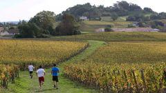Calendrier trail France Nouvelle-Aquitaine Gironde Trail en Octobre 2021 > Trail des coteaux de Fronsac (Fronsac)