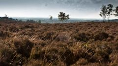 Trail calendar the Netherlands   Trailrunning race in November 2019 > Haarlerbergtrail (Haarle)