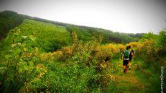 Trail calendar Belgium   Trailrunning race in June 2021 > Les Boucles Ardennaises (La Roche-en-Ardenne)
