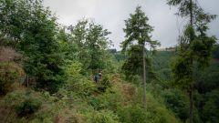 Calendrier trail Belgique   Trail en Juin 2021 > Escapardenne Trail (Houffalize)
