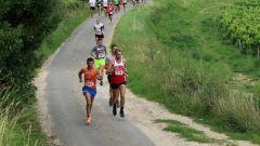 Trail kalender Frankrijk Nouvelle-Aquitaine Gironde Trailrun in Juli 2020 > Spicy Bike'n Trail (BOURG SUR GIRONDE)