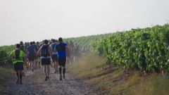 Trail calendar France Grand Est Marne Trailrunning race in July 2020 > Trail des Tordus (Verzenay)