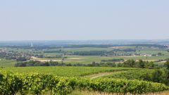 Trail kalender Frankrijk Nouvelle-Aquitaine Charente Trailrun in Juni 2020 > Trail de la Grande Champagne (Segonzac)