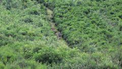 Calendrier trail France - Trail en Juin 2019 : Les Salles Trails en Haut-Forez à 42440 Les Salles