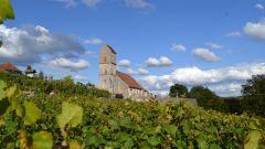 Trail calendar France Bourgogne-Franche-Comté Territoire de Belfort Trailrunning race in August 2019 > Trail des Bornes (Saint-Dizier-l'Évêque)