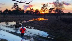 Trail calendar the Netherlands   Trailrunning race in November 2019 > Brabantse wal trail (Bergen op Zoom)