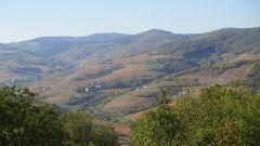Trail kalender Frankrijk Auvergne-Rhône-Alpes Rhône Trailrun in Oktober 2020 > Trail des Grisemottes (Quincie En Beaujolais)
