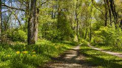 Calendrier trail Belgique   Trail en Juin 2020 > Trail du Tremplin  (Aiseau-Presles)