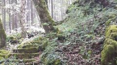 Calendrier trail Belgique   Trail en Septembre 2021 > Trail des  Chevaliers (Sinsin (Somme-Leuze))