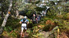 Trail kalender Frankrijk Île-de-France  Trailrun in September 2020 > Imperial Trail de Fontainebleau (Fontainebleau)